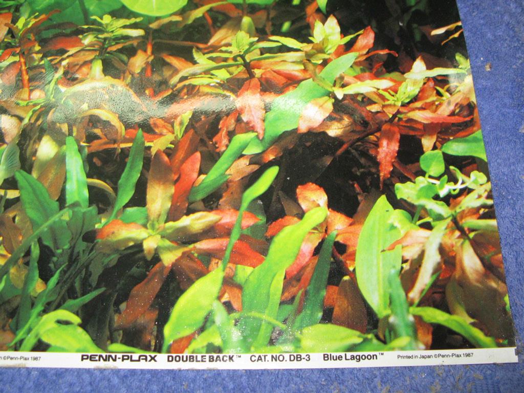 Fish aquarium in ecr - Tank2 Jpg
