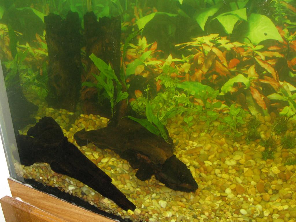Fish aquarium in ecr - Tank8 Jpg